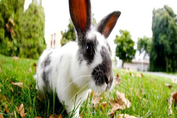 Síntomas de estrés o ansiedad del conejo
