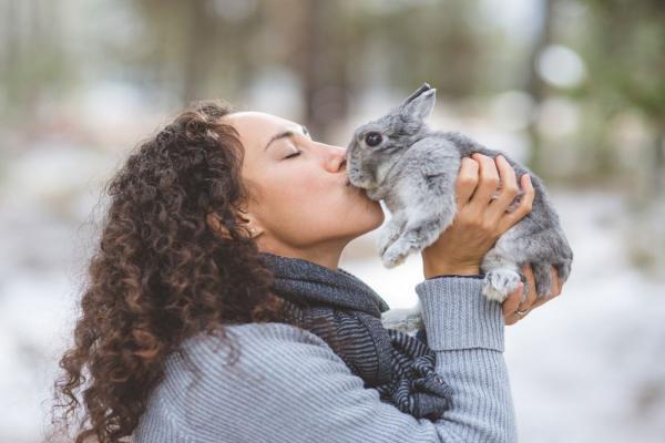 ¿Cómo quitar el estrés a un conejo?