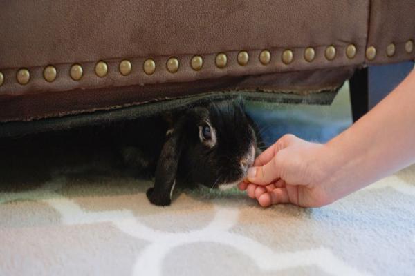 Señales de estrés en conejos