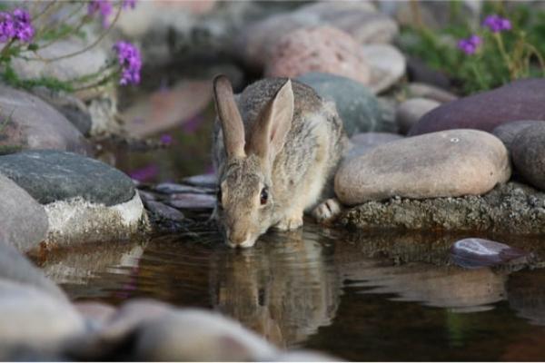 Consumo de agua en conejos