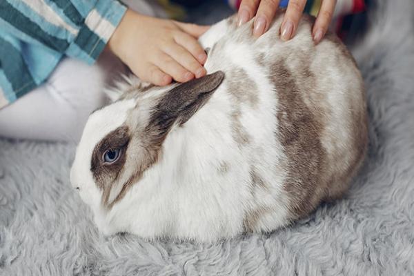 Beneficios de la esterilización o castración en conejos