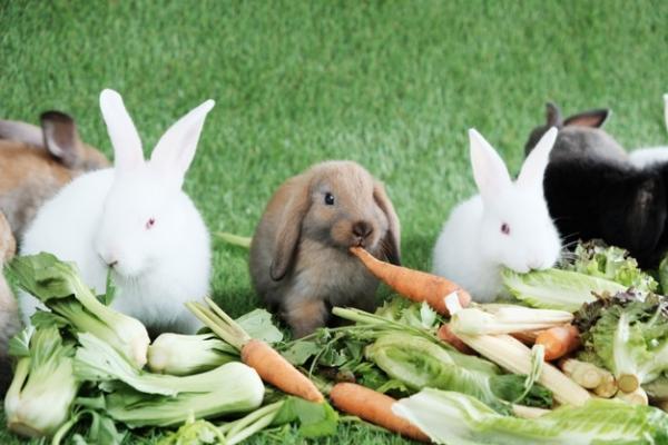 Frutas y verduras recomendada para conejos