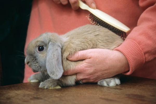 Características del pelo de conejo