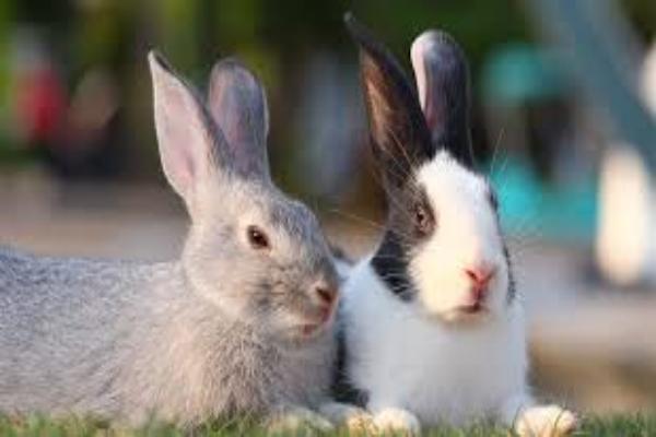¿Qué temperatura es demasiado alta para los conejos en el interior?