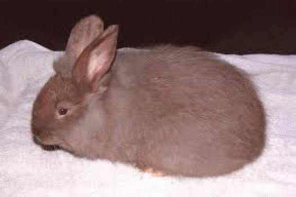 ¿Cómo saber si un conejo esta enfermo?