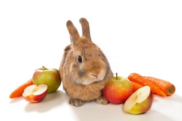 Lo esencial de la dieta del conejo