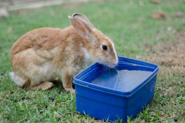 ¿Cómo refrescar a un conejo?,