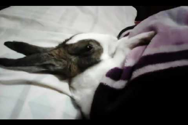 Mejores camas para conejos 2020