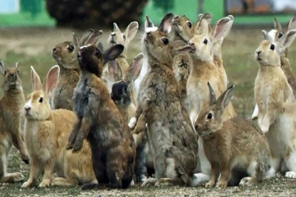 https://www.portugalresident.com/rabbit-now-in-danger-of-extinction-along-with-30000-other-animals-birds-and-plants/
