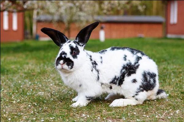 Vida de un conejo