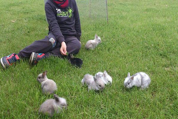 Como jugar con los conejos