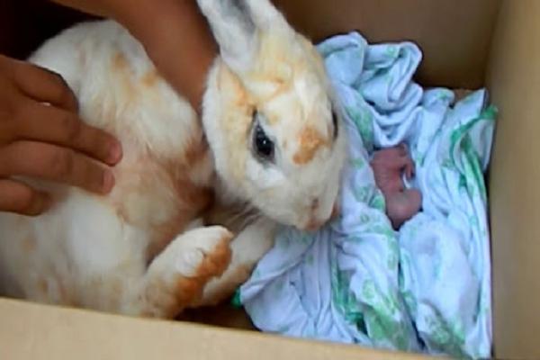 Parto en los conejos