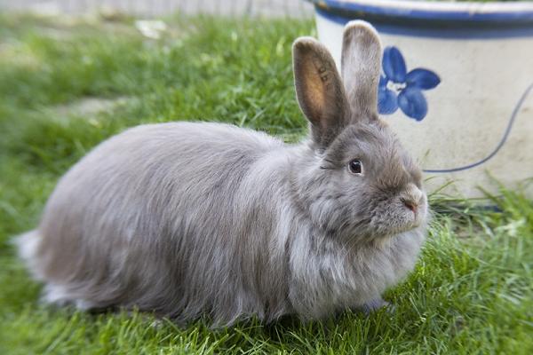 Como cuidar el pelo de mi conejo