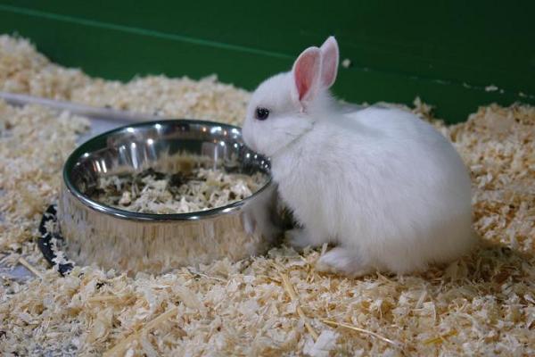 Deshidratación en conejos